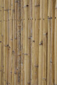 Bambus stěna — Stockfoto