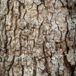 Bark — Stock Photo #28692701