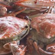 Steamed crab — 图库照片