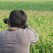 Corn field. — Stock Photo