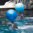 Dolphins play — Stock Photo #32952091
