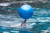 Dolphins play — Stock Photo