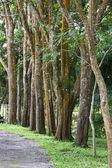 Bomen langs de weg. — Stockfoto