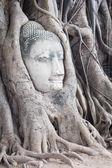 Head of Sandstone Buddha — Stock Photo