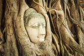 Head of Sandstone Buddha — Stockfoto