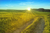 Golden Summer Meadows - Sunset Landscape — Stock Photo