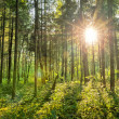 Stock Photo: Fairytale Forest - Sunburst