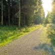Stock Photo: Dirt Road through enchanted Forest