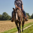 Stock Photo: Equitation - Western Riding