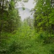 Stock Photo: Rain in Forest
