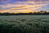 Východ slunce na polích — Stock fotografie