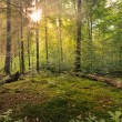 Stock Photo: Fairytale Forest - Sinburst