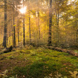 Fairytale Forest - Sunburst — Stock Photo