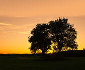 Trees at Sunset — Stock Photo