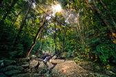 Sunburst in deep dark Jungle — Stock Photo