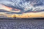 Dub na zasněžených polích při západu slunce — Stock fotografie