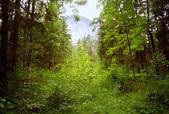 Heavy Rain in Forest — Stock Photo