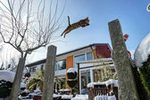 Bengal Cat jumping in snowy Garden — Stock Photo
