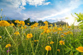 Flower Field at Sunset — Stock Photo