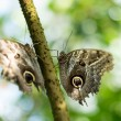 Butterflies sitting on Trunk — Stock Photo