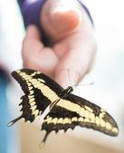 Schmetterling sitzt auf finger — Stockfoto