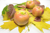 Apples on the fallen leaves — Stock Photo