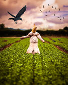 Scarecrow In Field — Stock Photo