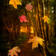 Falling Leaves — Stock Photo #13840793