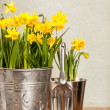Buckets Of Daffodils — Stock Photo