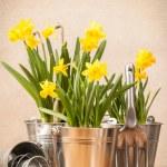Spring Planting — Stock Photo