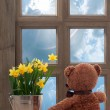 Spring Window - Photo