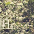 Birdcage In Blossom - Stock Photo