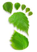 Leaf Footprint — Stock Photo