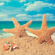 Starfish On Beach - Stock Photo