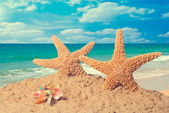 Starfish On Beach — Stock Photo