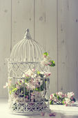 Bird Cage — Stock Photo