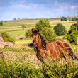 Countryside Horse — Stock Photo