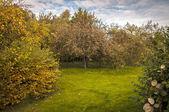 яблоневый сад — Стоковое фото
