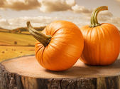 Pumpkins — ストック写真