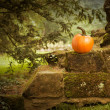 Pumpkin — Photo