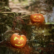 Two Pumpkins — Stock Photo #32138129