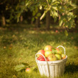 The Orchard — Stock Photo
