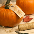Pumpkins For Thanksgiving — Stock Photo #34484351