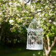 Stock Photo: Birdcage In Blossom