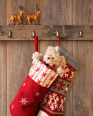 Xmas Stockings — Stock Photo