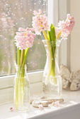 Vases Of Hyacinths — Stock Photo
