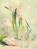 Hyacinth Arrangement — Stock Photo