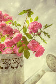 Roses In Watering Can — Stock Photo
