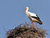 Stork in the nest II — Stock Photo