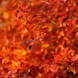 图库照片: Red autumn leaves